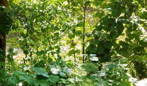 """The """"golden river"""" of W E B Du Bois from the Du Bois river garden in Great Barrington"""
